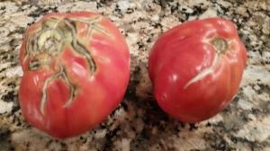 tomato cracks